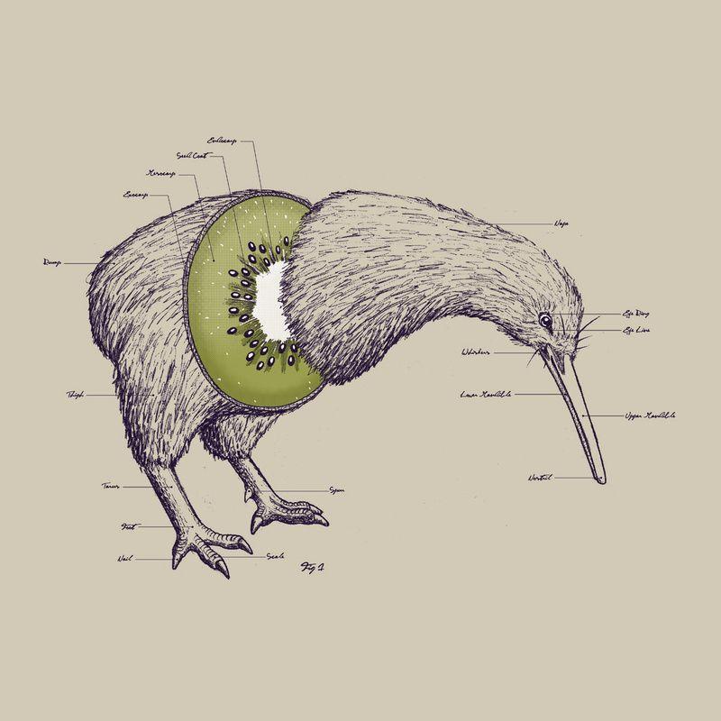 dit_is_een_kiwi